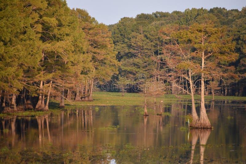 reflexión del árbol de ciprés imagenes de archivo