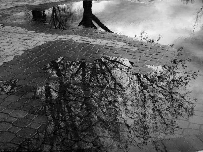 Reflexión del árbol en el charco del agua después de Sorm fotografía de archivo libre de regalías