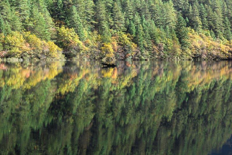 Reflexión del árbol en el lago del mirrir en Jiuzhaigou imagen de archivo