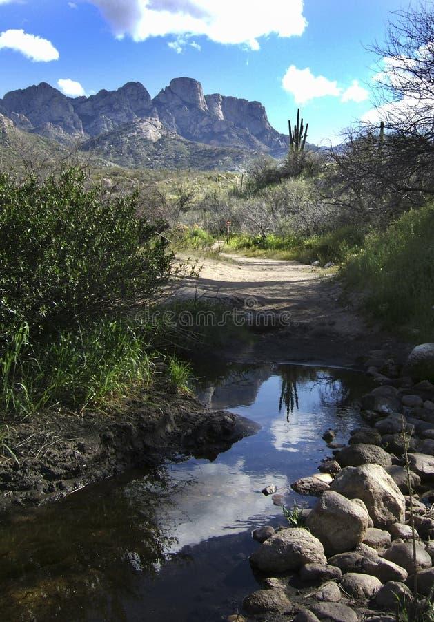 Reflexión del desierto fotografía de archivo