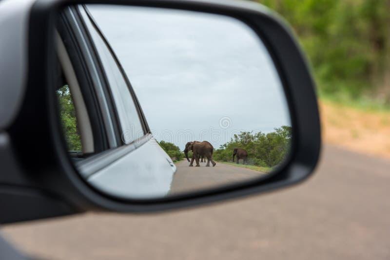 Reflexión del elefante en espejo de la vista posterior imagen de archivo