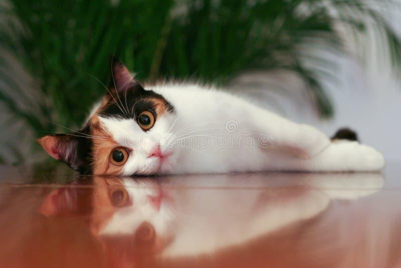 Reflexión del gato imagenes de archivo