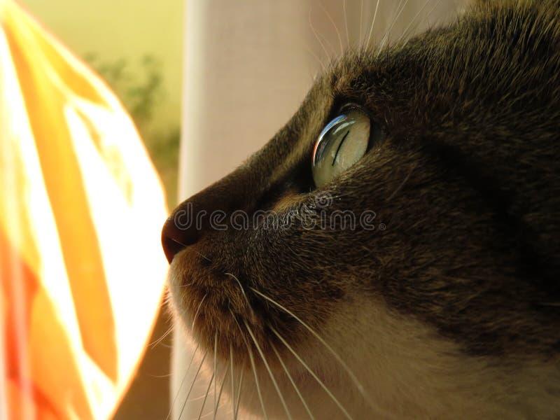 Reflexión del ojo verde del gato con el fondo amarillo y anaranjado foto de archivo