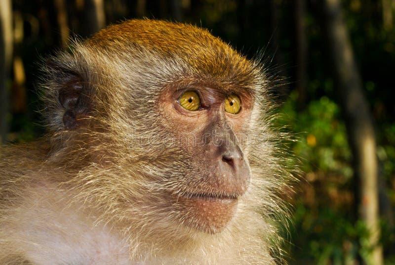 Reflexión del primate foto de archivo libre de regalías