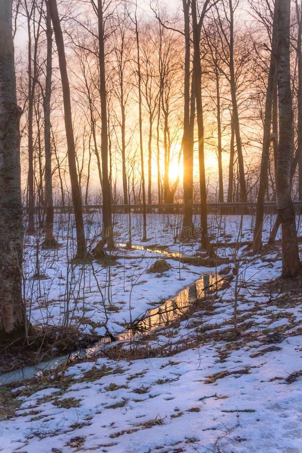 Reflexión del río del bosque imagen de archivo libre de regalías