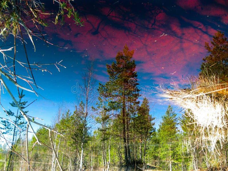 Reflexión en el agua fotos de archivo