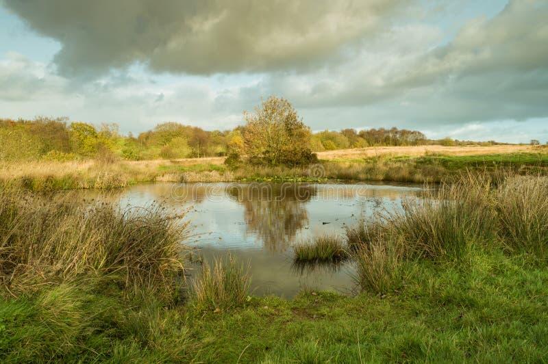 Reflexión en el agua de un árbol con las hojas de oro imagen de archivo libre de regalías