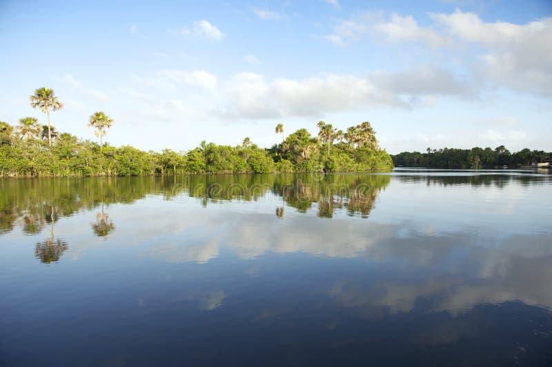 Reflexión perezosa brasileña remota de la calma del río fotos de archivo