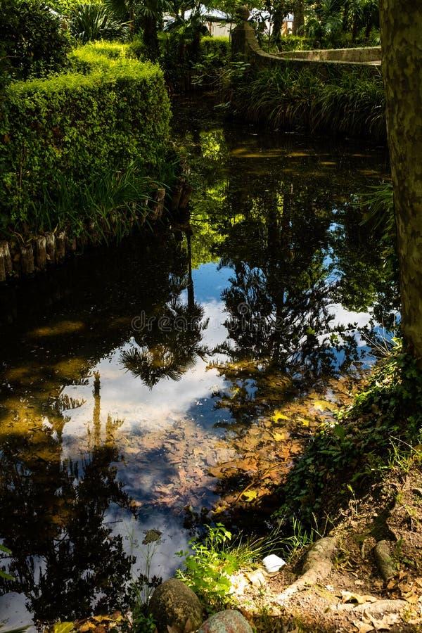 Reflexión reservada del agua de la corriente del río en una selva tropical fotos de archivo libres de regalías