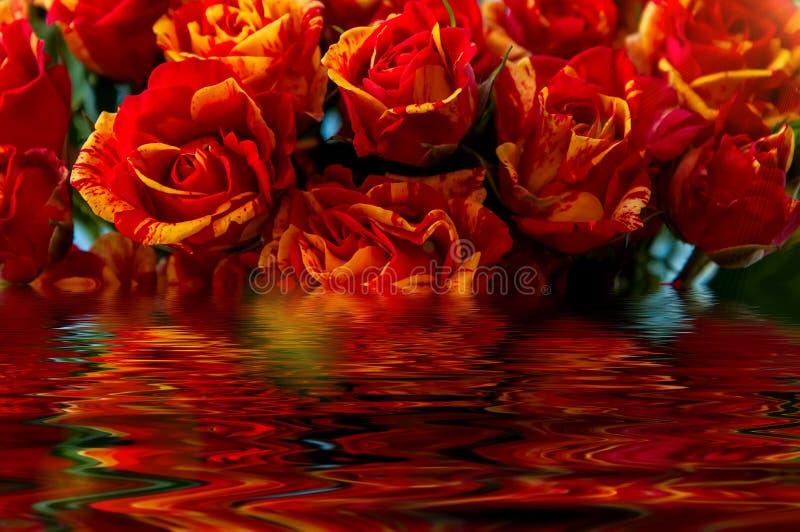 Reflexión roja del agua de rosas amarillas imagen de archivo