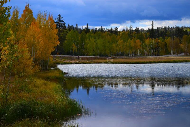 Reflexión temprana del cielo del otoño y del agua de los árboles fotos de archivo libres de regalías