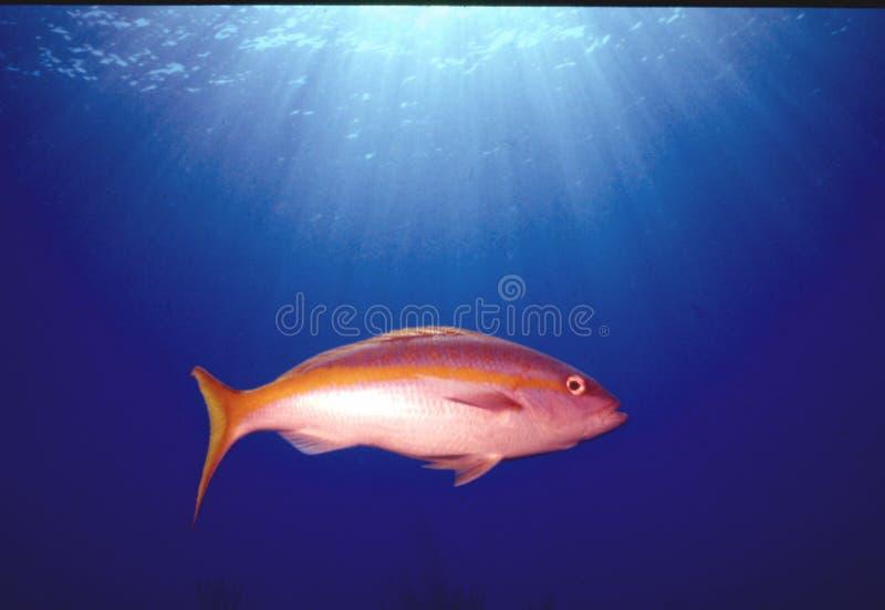 Download Reflexion stockfoto. Bild von cayman, tauchen, marine, unterwasser - 28942