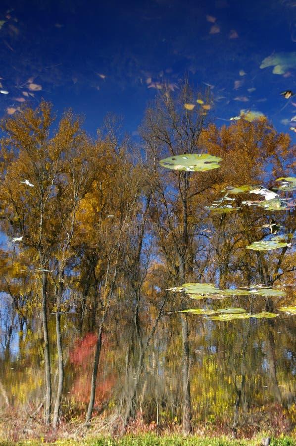 Download Reflexion fotografering för bildbyråer. Bild av yellow - 78728871