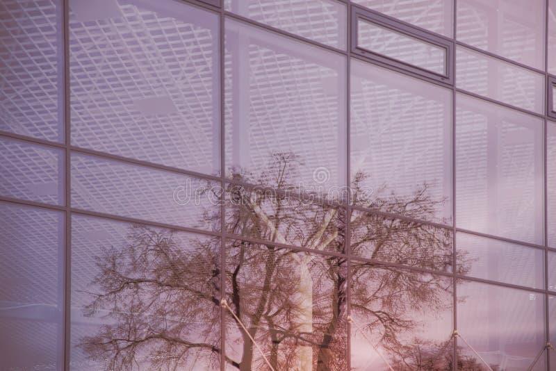 Reflexion av ett träd i fönstren av en exponeringsglasbyggnad Seamless texturera för bakgrund royaltyfria bilder
