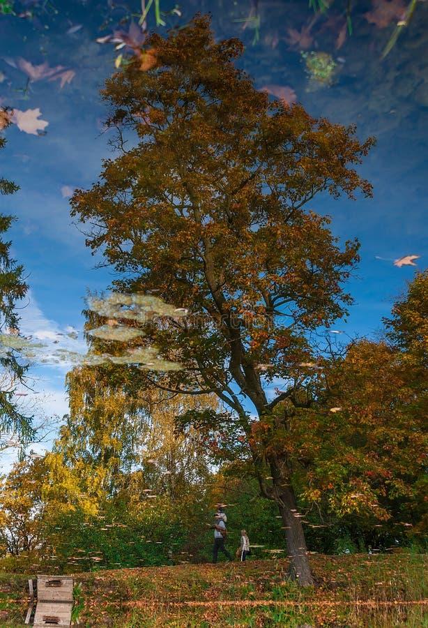 Reflexion av höstträd i ett damm arkivbild
