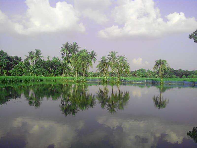 Reflexion av naturen royaltyfria foton