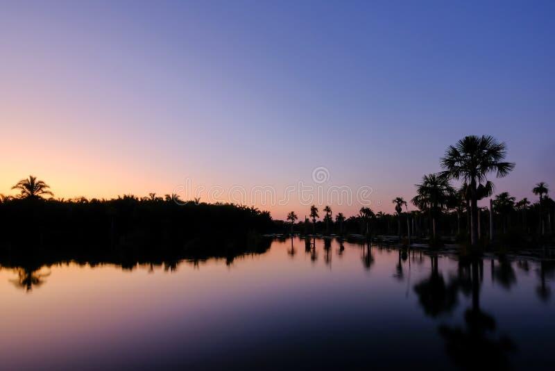 Reflexion av palmträden i lagun Lagoa das Araras på soluppgång, Bom Jardim, Mato Grosso, Brasilien, Sydamerika arkivfoto