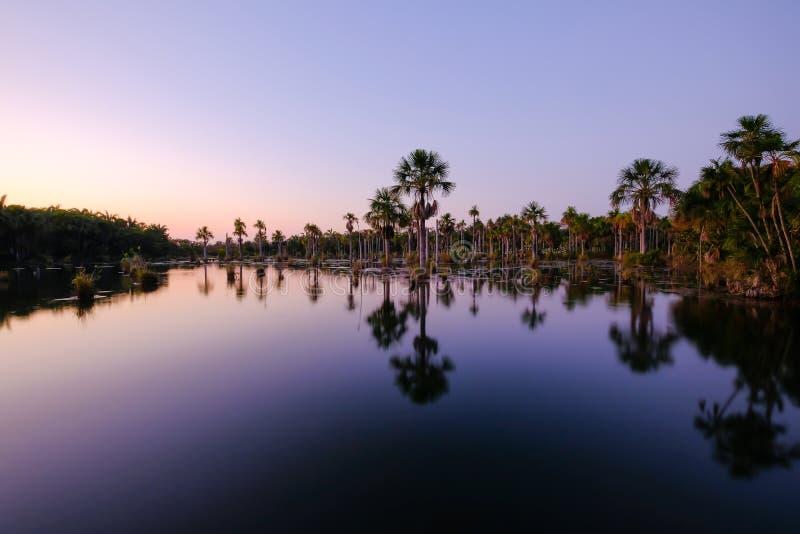Reflexion av palmträden i lagun Lagoa das Araras på soluppgång, Bom Jardim, Mato Grosso, Brasilien, Sydamerika royaltyfri fotografi