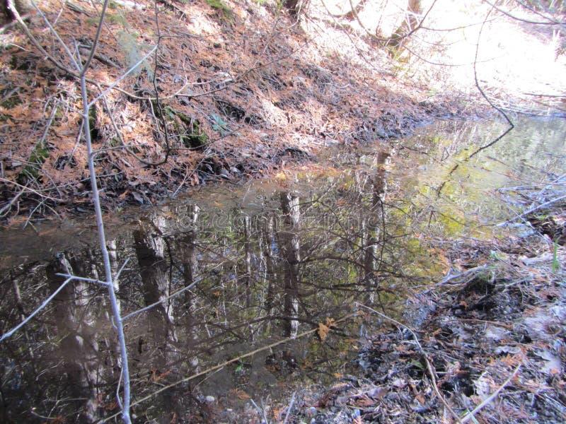 Reflexion av skogträd i delvist djupfryst vatten royaltyfri bild