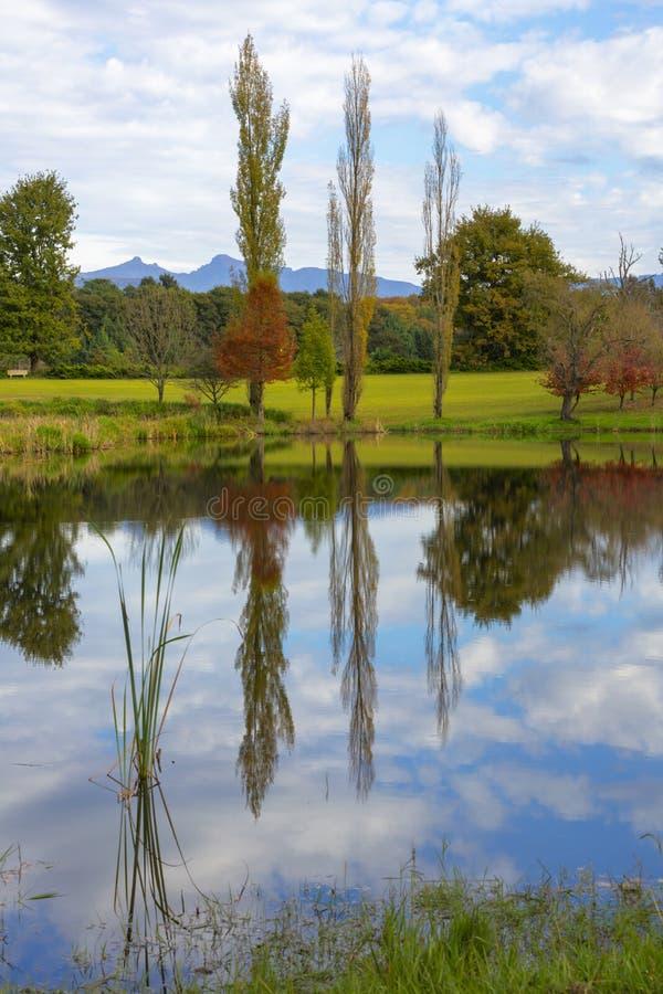 Reflexion av tr?d p? vattnet fotografering för bildbyråer