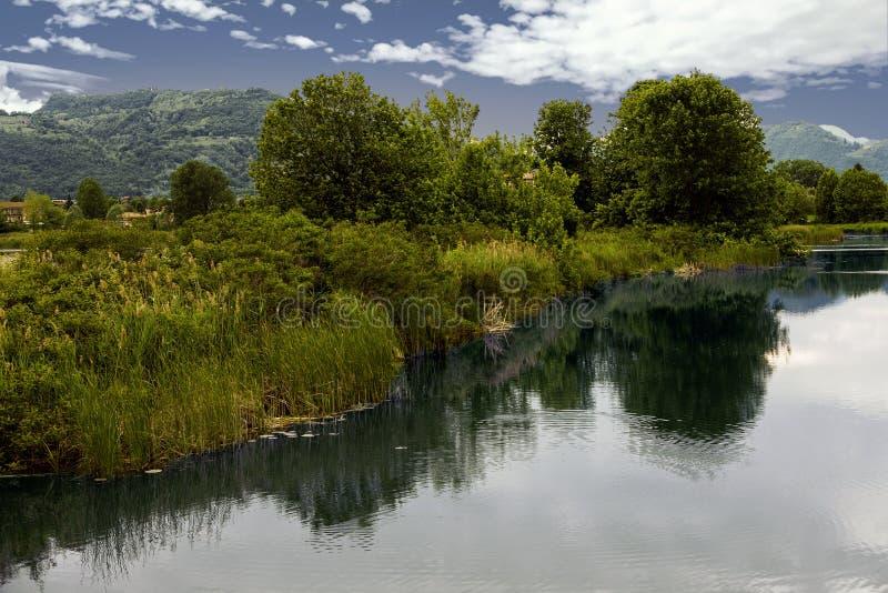 Download Reflexion Des Baums Auf Wasser Stockbild - Bild von blatt, grün: 106800887