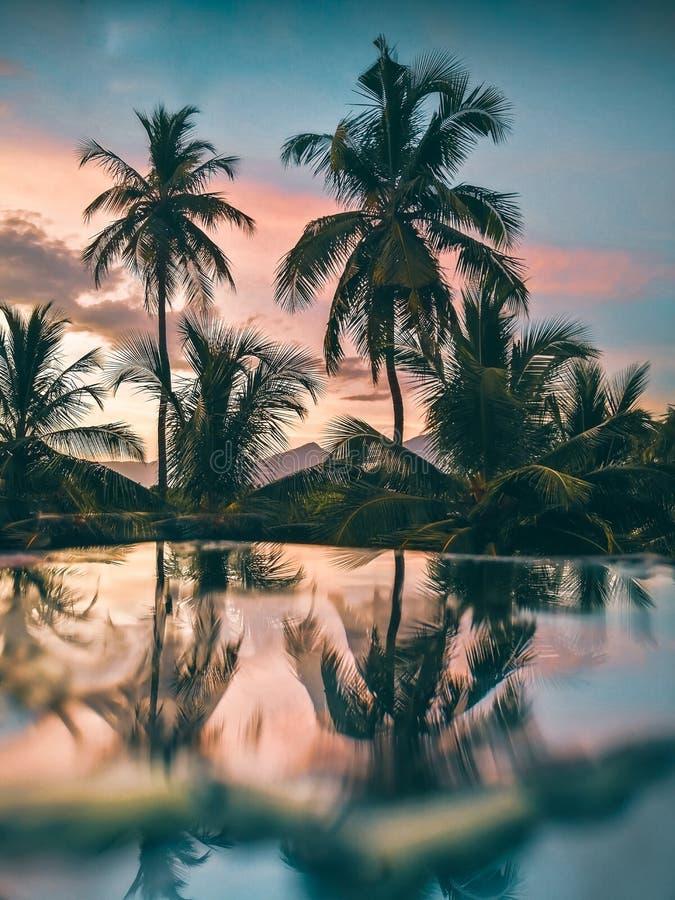 Reflexion des Kokosnussbaums nach dem Regen lizenzfreies stockbild