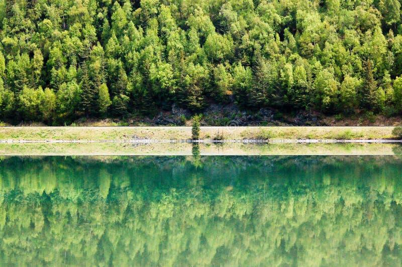 Reflexion des Waldes im Elch-Durchlauf stockbilder