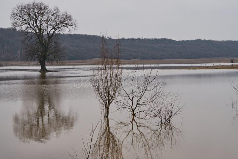 Reflexion eines Baums auf einem überschwemmten Feld an einem bewölkten Tag lizenzfreie stockbilder