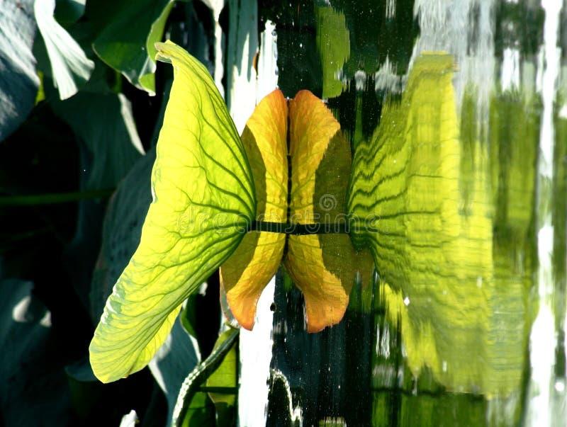Reflexion eines Blattes im Wasser lizenzfreie stockbilder