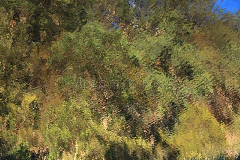 Reflexion för skogfärgvatten royaltyfria bilder