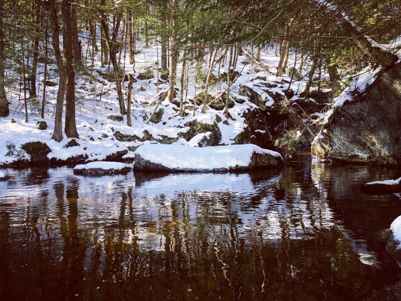 Reflexion för skugga för Enders delstatsparkträd royaltyfri foto