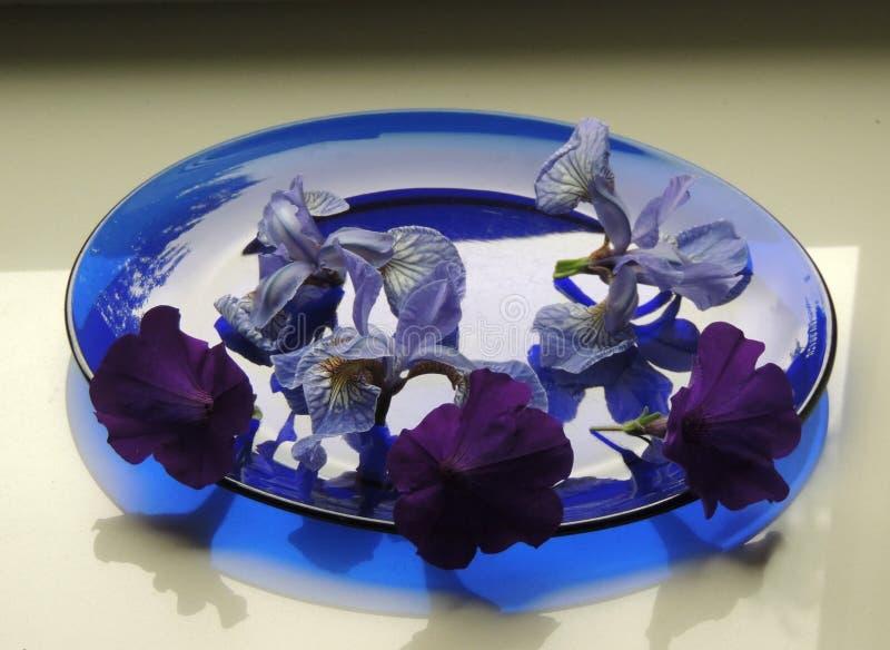 Reflexion för skugga för platta för blått för iriers för knoppar för blommasnittblommor arkivbild