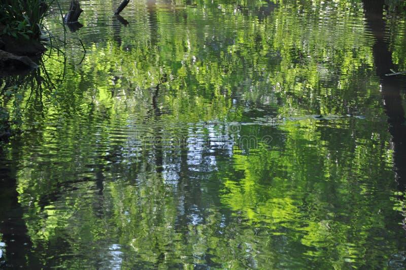 Reflexion i laken arkivbild
