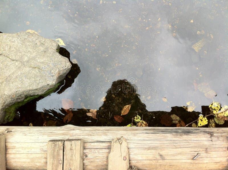 Reflexion i vattnet se ner från en bro royaltyfria bilder