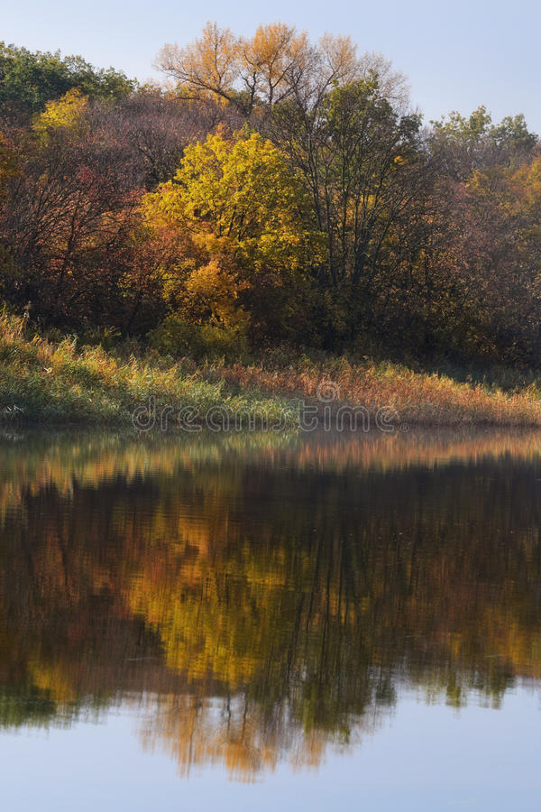 Reflexion. Reflected in the river shore autumn morning royalty free stock images