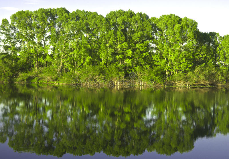 Download Reflexion in the river stock photo. Image of forest, river - 15255344
