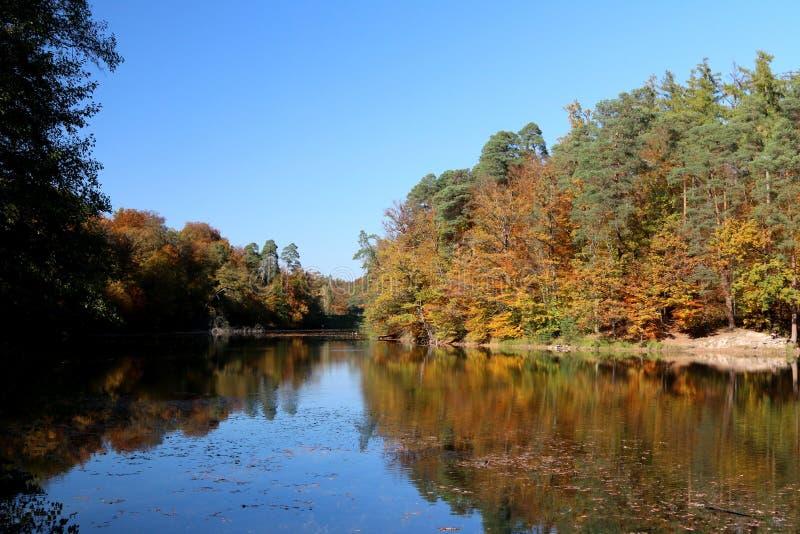 Reflexion vatten, natur, blad