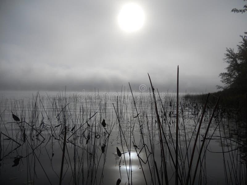 Reflexion von Schilfen im Wasser auf einem nebelhaften Morgen stockfotografie