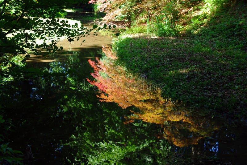 Download Reflexion woda zdjęcie stock. Obraz złożonej z greenbacks - 13332264
