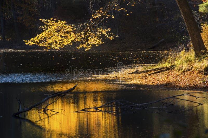Reflexionen auf dunklem Wasser der gelben Niederlassung, Mansfield-Höhle, Co lizenzfreie stockbilder