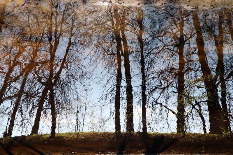 Reflexionen av tr?den i vattnet av skogsj?n ?r mystisk och magisk som bakgrunden arkivfoton