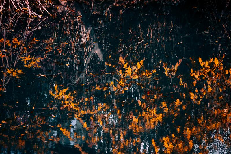 Reflexionen im Wasser lizenzfreies stockbild