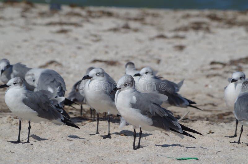 Reflexionen: seagulls i solen arkivbild