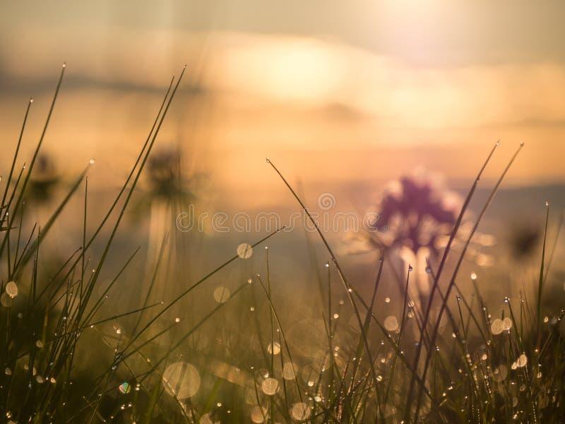 Reflexionen und Tropfen des Taus auf dem Gras stockbild