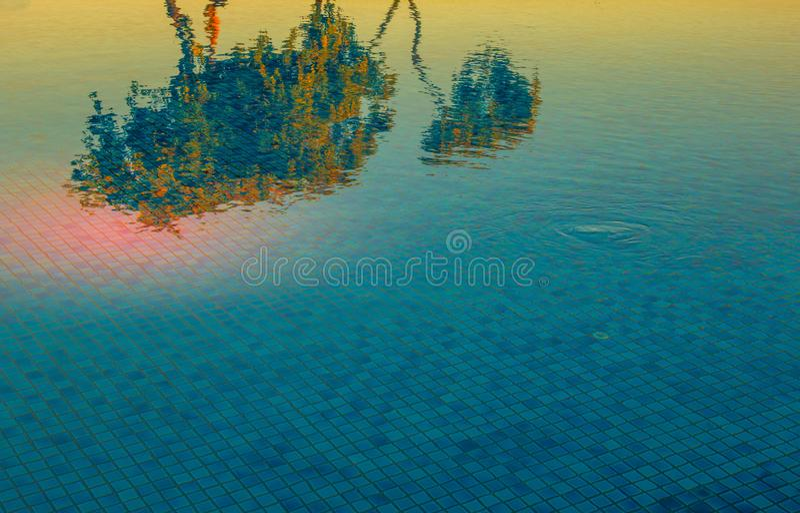 Reflexioner av orange blommor i en blå pöl av vatten royaltyfri bild
