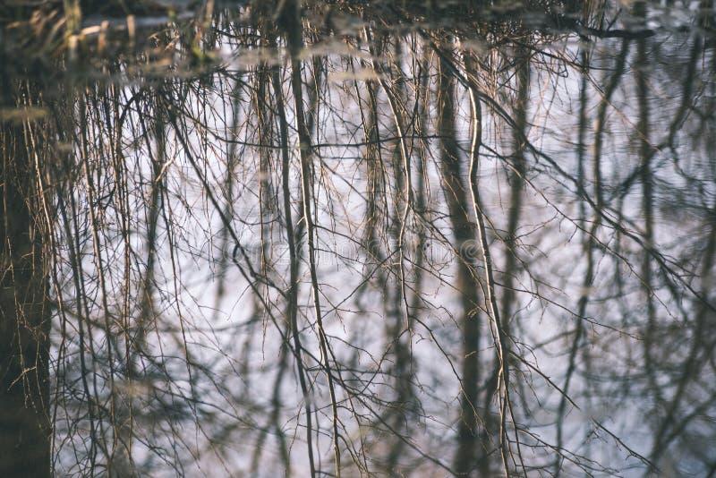 reflexioner av träd i bergfloden i retro tappning för sommar royaltyfria bilder