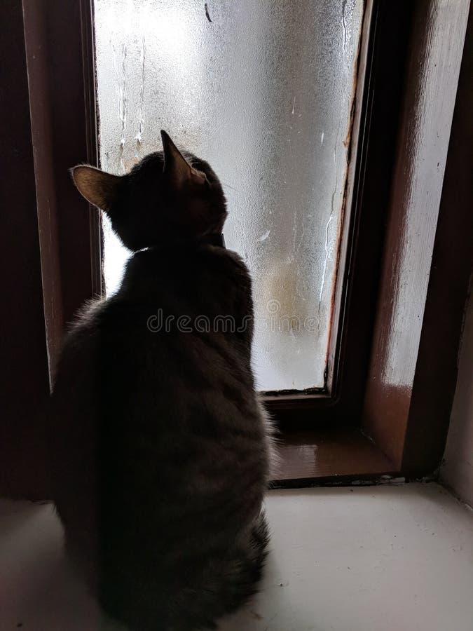 Reflexioner för katt` s nära fönster arkivfoton