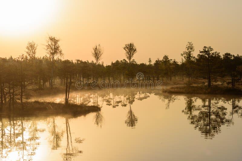 Reflexioner på vatten Härligt idylliskt morgonljus, under soluppgång i myr arkivbilder