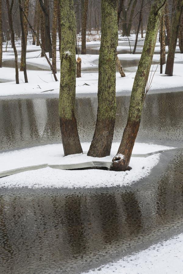 Reflexiones de árboles sobre el hielo fotografía de archivo libre de regalías