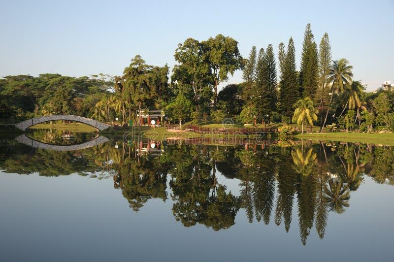 Reflexiones de árboles y de un puente en un parque durante luz del amanecer imagen de archivo